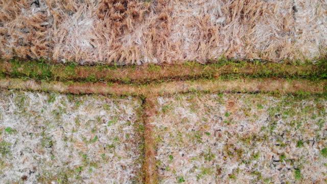 drone footage of harvested rice fields - ubud, bali indonesia - ubud stock videos & royalty-free footage