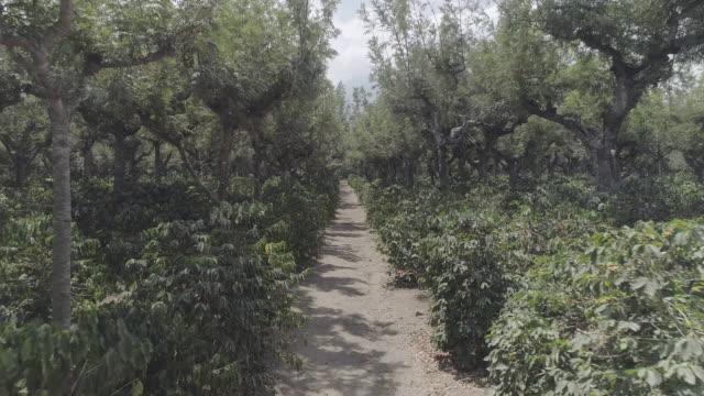vídeos y material grabado en eventos de stock de drone footage of sugar plantation - oficio agrícola