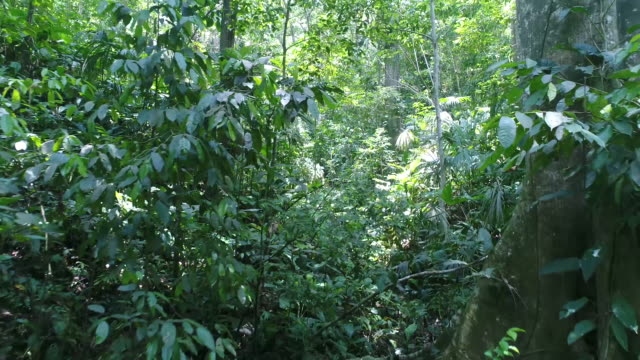 drone footage of trees and plants growing in forest, tayrona national park, colombia - tayrona national park stock videos and b-roll footage