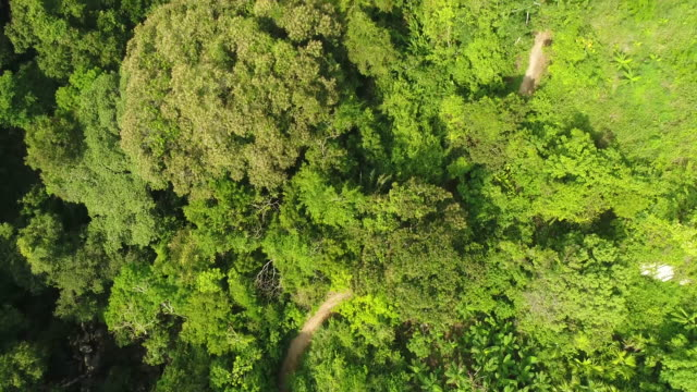 drone footage of trees growing in forest, tayrona national park, colombia - tayrona national park stock videos and b-roll footage