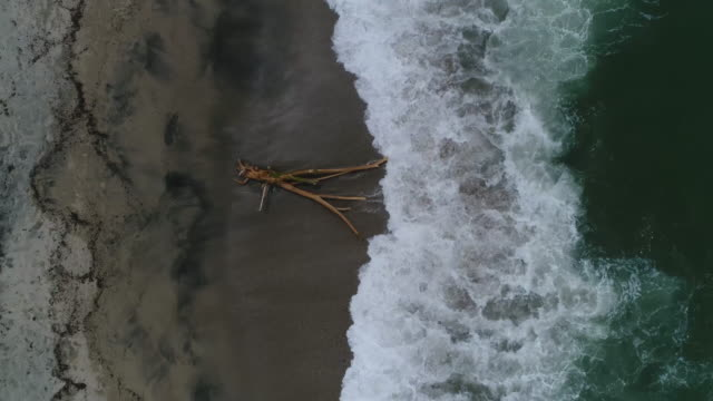 drone footage of waves splashing on driftwood at beach, tayrona national park, colombia - tayrona national park stock videos and b-roll footage