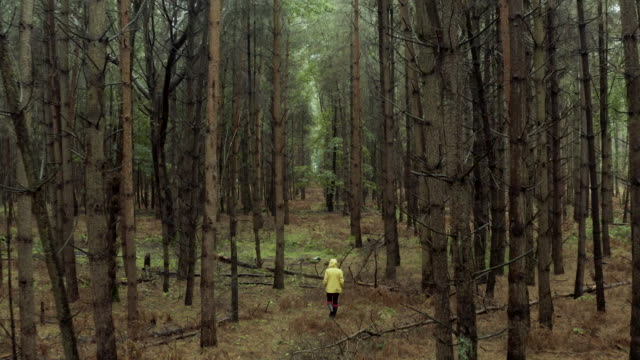 drone footage of woman in yellow raincoat in wet forest - evergreen stock videos & royalty-free footage