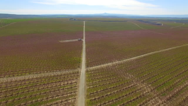 vídeos y material grabado en eventos de stock de drone footage recorded with drone flying over a long straight path between the peach blooming trees with pink colors in a stunning countryside landscape. 4k uhd. - acera
