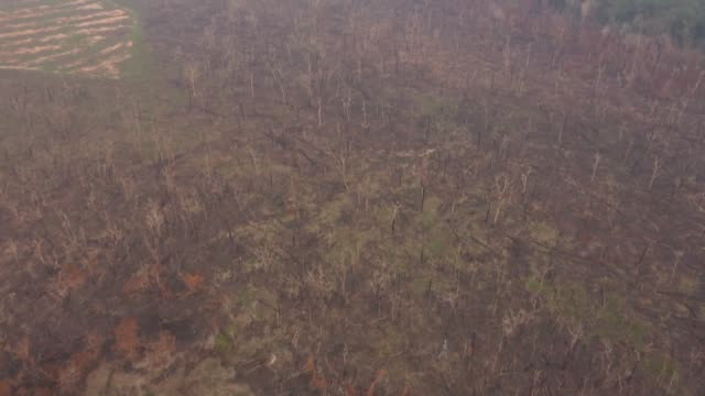 vídeos y material grabado en eventos de stock de drone images of amazon forest affected by wildfires in brazil's rondonia state - amazonas state brazil