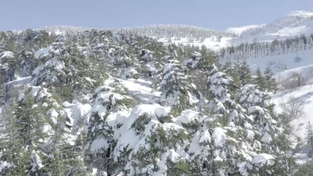 Drone images show the Cedars forest reserve and mountains in Lebanon's Ain Zhalta after a snowstorm