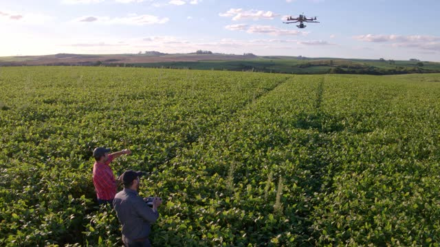 drone in soybean crop. - aircraft point of view stock videos & royalty-free footage