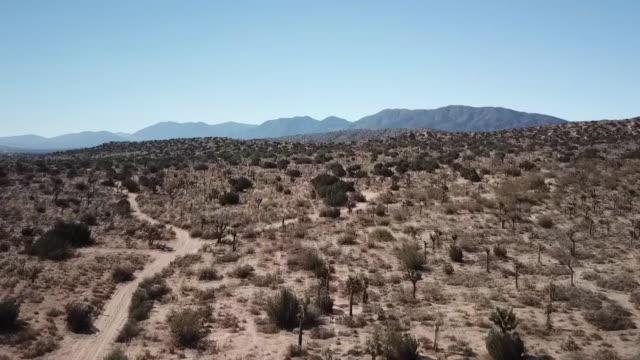 ktla drone pov joshua tree - deserto mojave video stock e b–roll