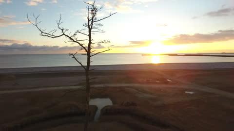 aerial drone, kashima's lone pine tree, fukushima, japan - single object stock videos & royalty-free footage