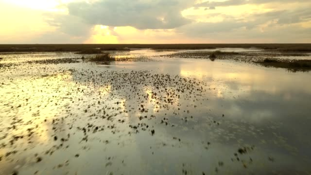 vídeos de stock e filmes b-roll de a drone low flies over wetlands during magic hour in coral springs florida - estados da costa do golfo