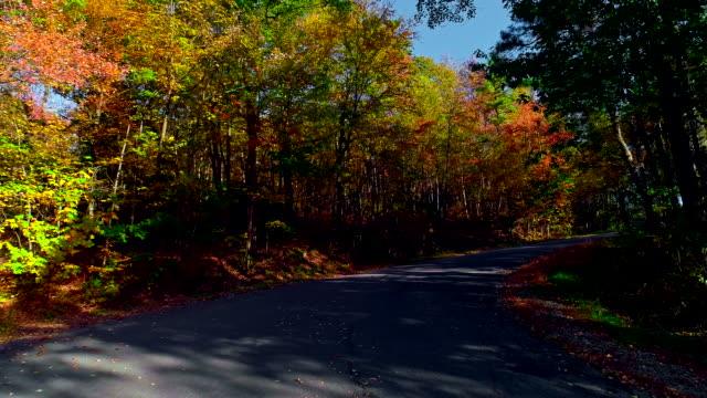 Drohne niedriger Höhe Video. Flug entlang der Landstraße durch Wald in üppigem Grün Herbst-Saison. Poconos, Pennsylvania, USA