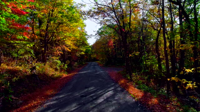 drone low-altitude video. flying along the country road through forest during the lush foliage fall season. poconos, pennsylvania, usa - pennsylvania stock videos & royalty-free footage