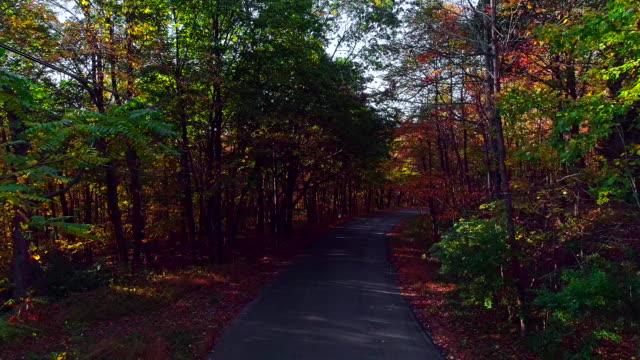 vídeos y material grabado en eventos de stock de video de poca altura de drone. vuelo a lo largo de la carretera a través del bosque durante el temporada de otoño de exuberante follaje. poconos, pennsylvania, estados unidos - árbol de hoja caduca