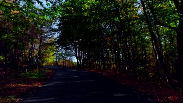 drone låg höjd video. flygande längs landsvägen genom skog under de lummiga lövverket höstsäsongen. poconos, pennsylvania, usa - poconobergen bildbanksvideor och videomaterial från bakom kulisserna