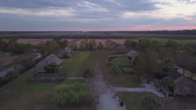 drone moves through plantation during dusk - slavery stock videos & royalty-free footage