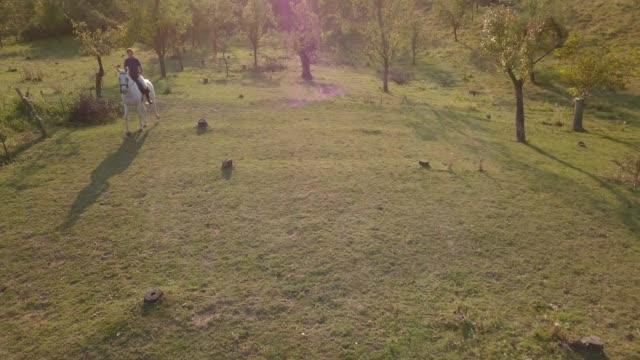 stockvideo's en b-roll-footage met drone naar beneden te schieten van de vrouw op witte paard op een veld - alleen één mid volwassen vrouw