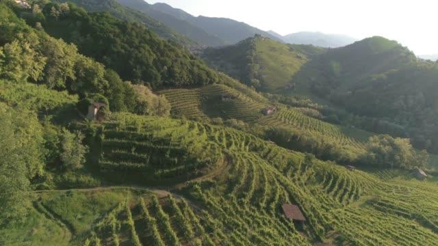 drone sulle colline del prosecco, vigneti, valdobbiadene, veneto, italia - hill video stock e b–roll