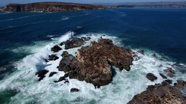 a drone orbits a rock island full of sea lions in bodega bay california - pazifik stock-videos und b-roll-filmmaterial