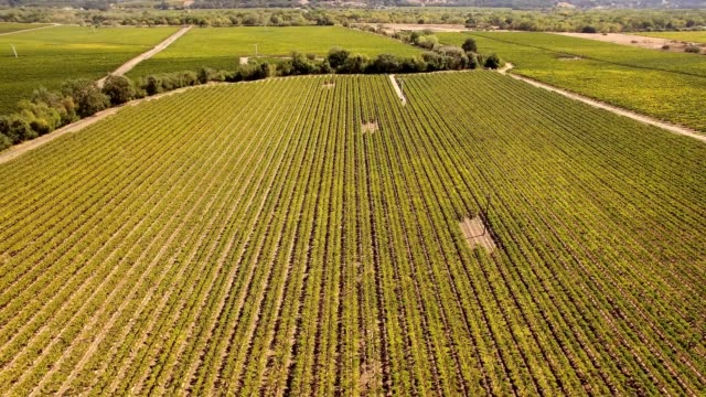 A drone orbits a vineyard in Sonoma wine country of Healdsburg California