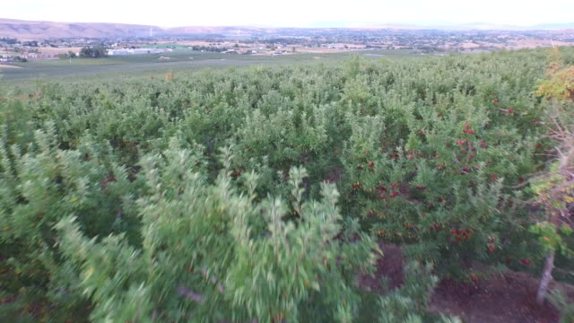 drone over orchard - wiese stock videos & royalty-free footage