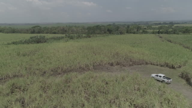 drone over sugar cane field - guatemala stock videos & royalty-free footage