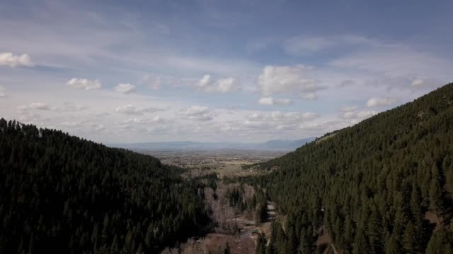 vídeos de stock, filmes e b-roll de a drone pans up through a forested canyon in bozeman montana - bozeman
