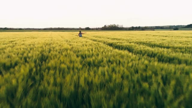 drone point of view carefree,exuberant young female farmer running in idyllic,rural green wheat field,slow motion - harmony stock videos & royalty-free footage