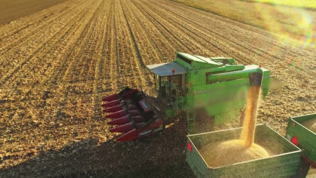 Drone point of view combine harvester chute filling trailer with harvested corn in sunny,rural field,slow motion