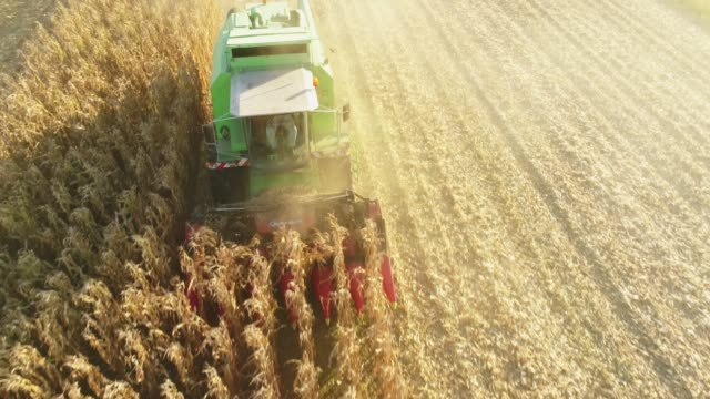 drone point of view combine harvester harvesting corn crop in sunny,rural field,slow motion - tractor stock videos & royalty-free footage