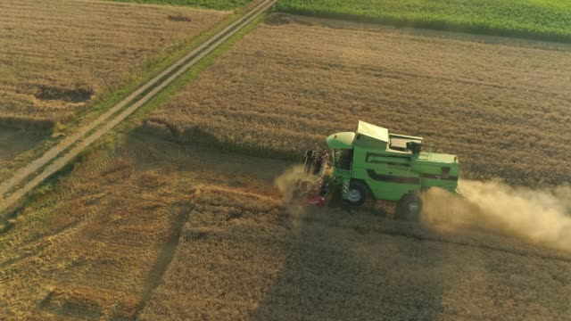 drone point of view combine harvester harvesting sunny,rural wheat crop. - combine harvester stock videos & royalty-free footage