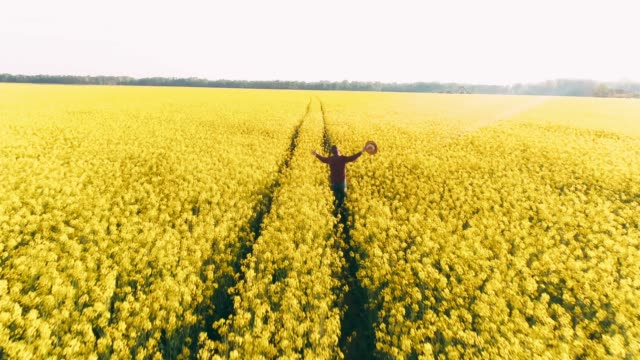 Drone point of view exuberant farmer running in idyllic,sunny rural yellow canola field,real time