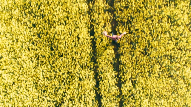 Drone point of view exuberant farmer running in idyllic,sunny rural yellow canola field