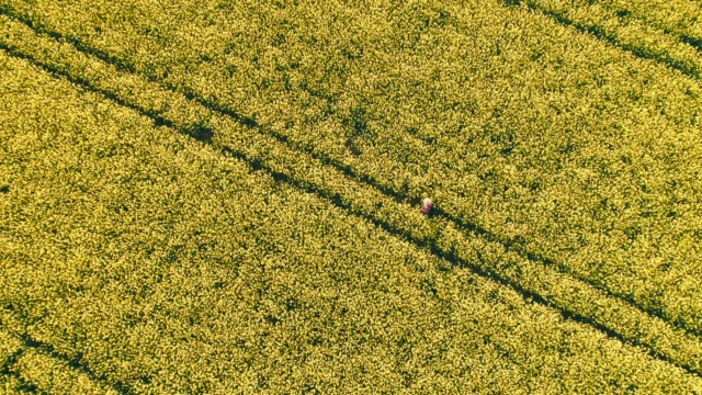 Drone point of view farmer walking in idyllic,sunny,rural yellow canola field,real time