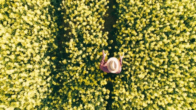 drone point of view farmer walking in sunny rural yellow canola field,real time - scena rurale video stock e b–roll