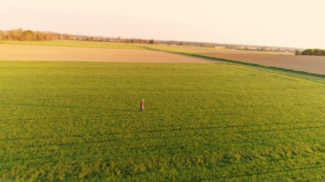 Drone point of view farmer walking in vast,sunny idyllic green wheat field,slow motion