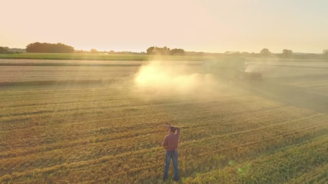 drone point of view farmer watching combine harvester harvesting sunny,idyllic rural wheat crop,slow motion - tractor stock videos & royalty-free footage