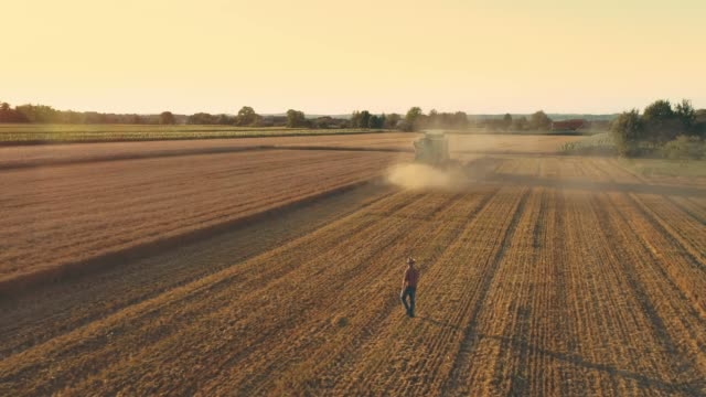 drone point of view farmer watching combine harvester harvesting sunny,idyllic rural wheat crop,slow motion - wheat stock videos & royalty-free footage