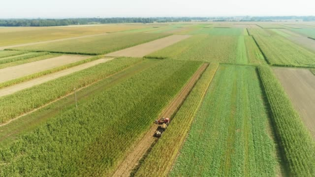 drone point of view farmers harvesting potato crop in sunny,rural field,real time - raw potato stock videos & royalty-free footage