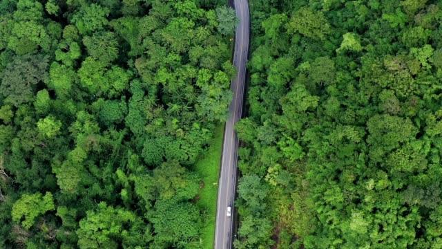 旅の旅のショットを確立するための森を通る道路のドローンの視点 - 有名原生地域点の映像素材/bロール