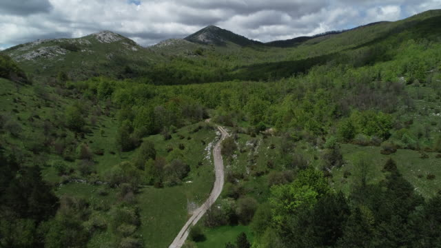 Drone Point Of View on Country Road Thru Forest
