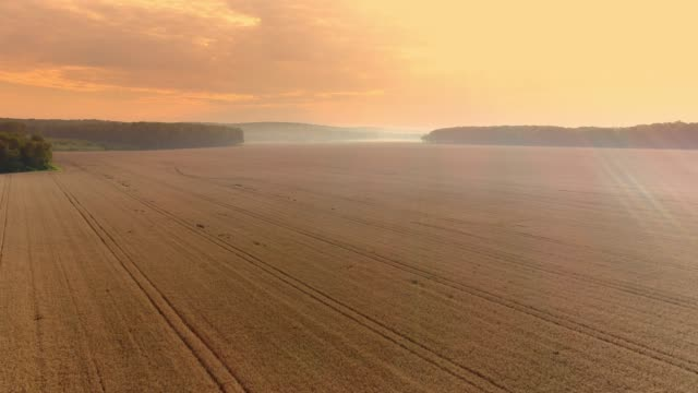 drone point of view vast,idyllic golden wheat crop. - wheat stock videos & royalty-free footage