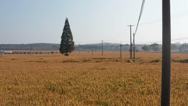 drone point view of autumn field - amische stock-videos und b-roll-filmmaterial