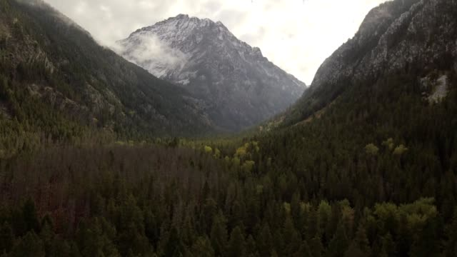 vidéos et rushes de a drone rises out of a treeline to reveal mountains of bozeman montana - bozeman