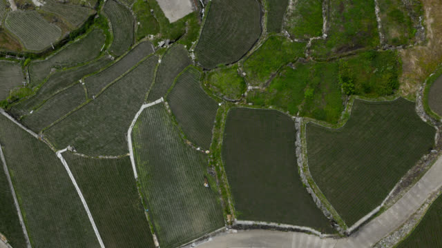 drone rises over paddy fields, japan. - zoom out stock videos & royalty-free footage