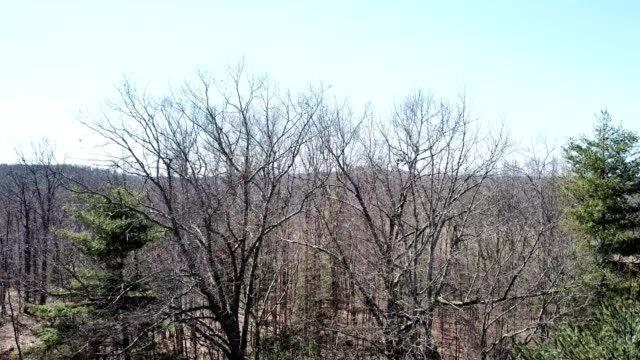 a drone rises over trees to reveal countryscape in beckley west virginia - dronebase stock videos and b-roll footage