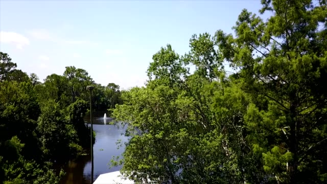 a drone rises over trees to reveal turtle lake in jacksonville florida - jacksonville florida video stock e b–roll