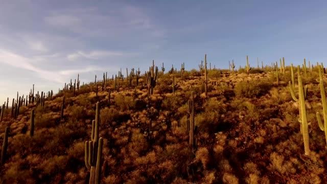 vidéos et rushes de a drone rises up saguaro mountain at sunset in phoenix arizona - cactus
