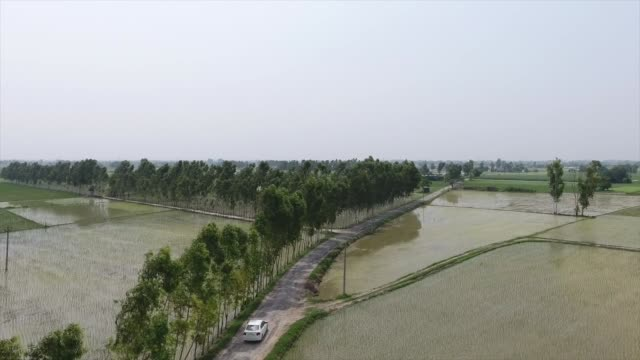 drone shot captures a lone car driving past rice fields in punjab, india - punjab region stock-videos und b-roll-filmmaterial