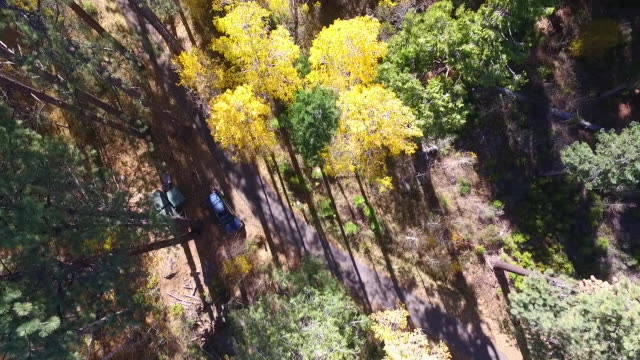 drone shot descent tilt up: aspen trees, road, in south lake tahoe - grove stock videos & royalty-free footage