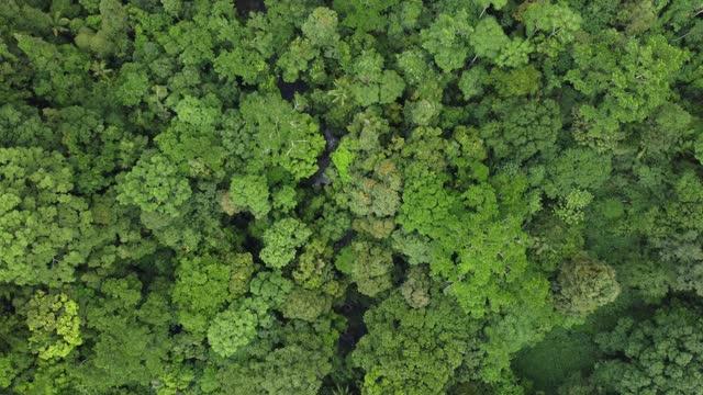 オーストラリアの熱帯雨林の4kでドローンショット - 樹冠点の映像素材/bロール
