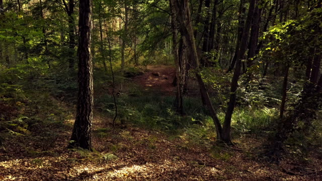 drone shot in a forest - brandenburg state stock videos & royalty-free footage